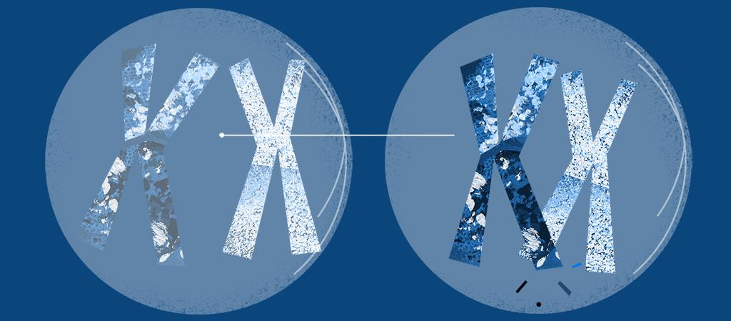 Cell Division illustration 1