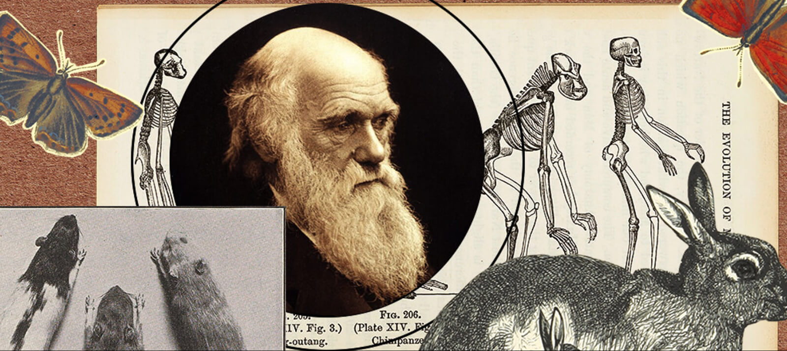 Illustration for Darwin's Problem